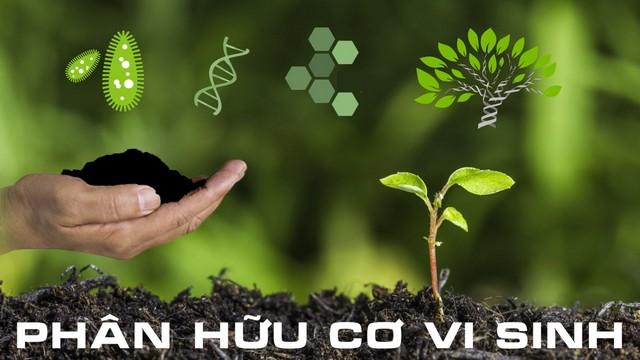 Sử dụng phân hữu cơ vi sinh thay cho phân vô cơ để chống thoái hóa đất