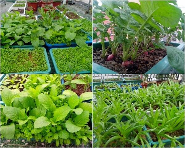 Nên dùng loại phân bón nào cho đất trồng rau sạch?