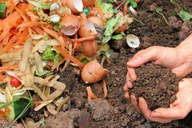 Rác thải nhà bếp cũng có thể làm phân ủ cho đất trồng rau