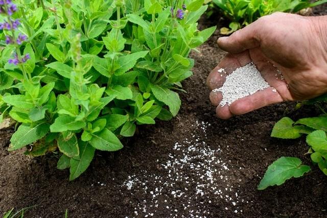 Phân vô cơ cần được dùng với lượng thích hợp cho đất trồng rau
