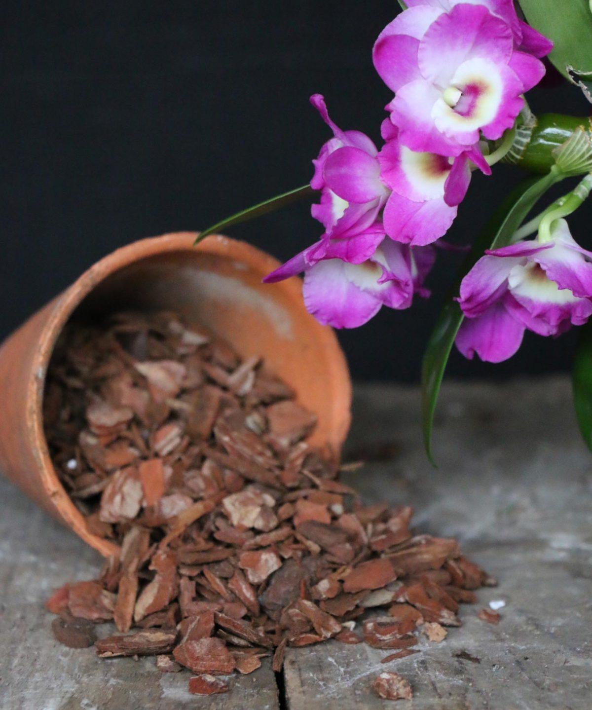 Giá thể trồng hoa lan phổ biến