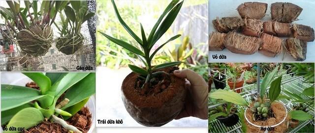 Mảnh vụn dừa về hình thức khác với xơ dừa hay vỏ dừa dùng trồng lan