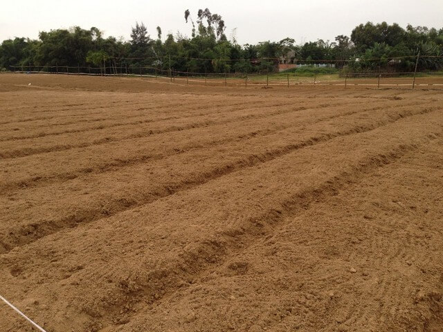 Làm đất và lên luống trồng dây tây ở vườn quy mô lớn