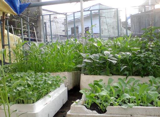 Để có vườn rau sạch xanh tốt, bạn cần chuẩn bị đất trồng phù hợp