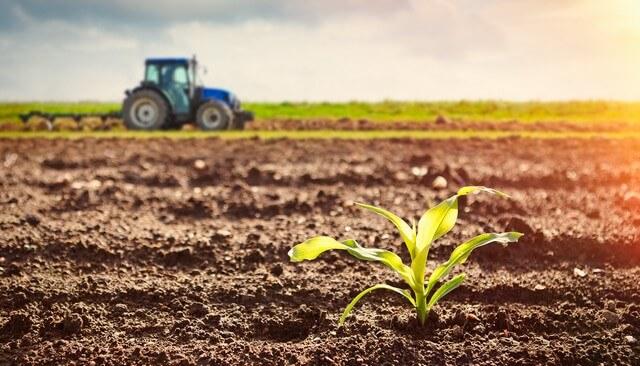 Những biện pháp cải tạo đất trồng lúa mang lại hiệu quả cao - Thế giới giá  thể, đất trồng cây