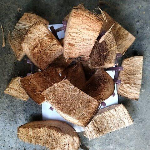 Vỏ dừa dùng trồng lan có thể tự xử lý tại nhà, giá thành rẻ