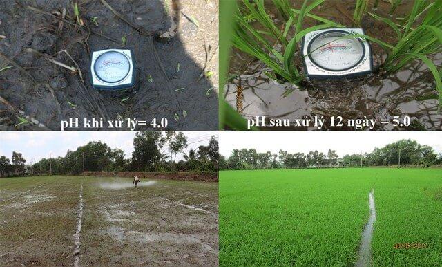 Đo độ pH của đất là cách xác định đất chua chuẩn xác nhất