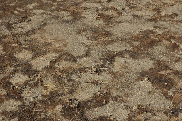 Một số chế phẩm sinh học hiện nay cho hiệu quả khử chua đất cao