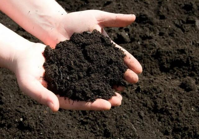 Đất trồng hồ tiêu phải giàu mùn, tơi xốp và thoáng khí