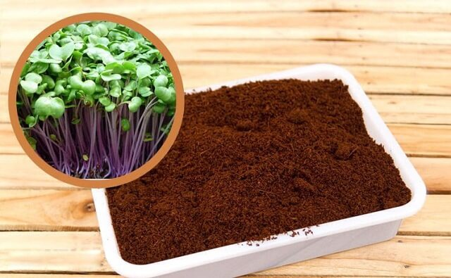 Mùn cưa được sử dụng làm giá thể trồng rau