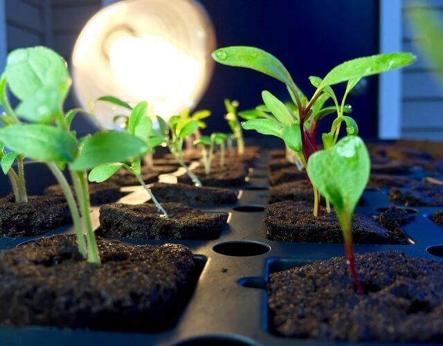 Mùn cưa có thể làm môi trường thuận lợi cho cây phát triển