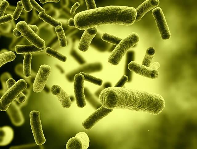 Vi sinh vật sẽ phát triển trên các lớp màng nhầy của giá thể