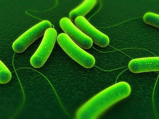 Giá thể vi sinh áp dụng nhiều trong quá trình xử lý nước thải sinh học