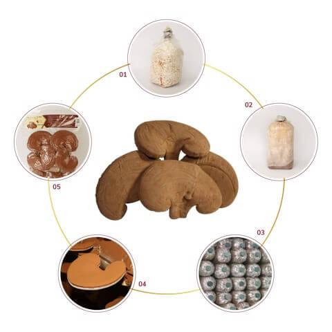 Mùn cưa ủ đúng cách giúp nâng cao năng suất, chất lượng cây trồng