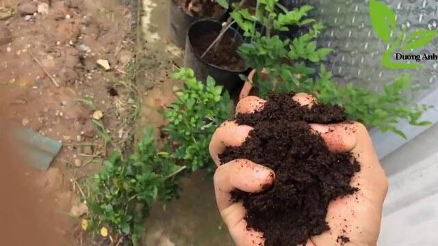 Phân hữu cơ ủ từ mùn cưa dễ sử dụng và đem lại lợi ích cao