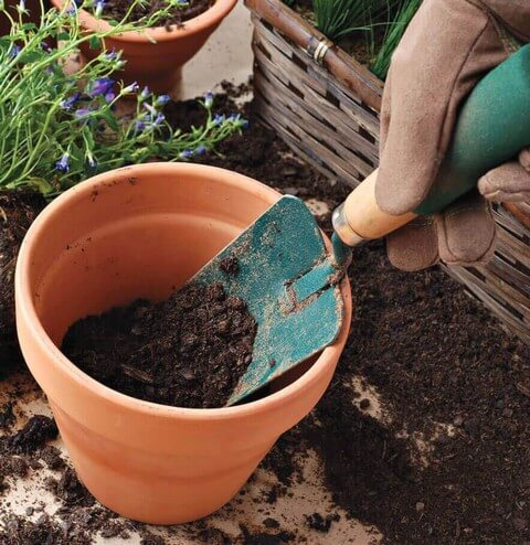 Có thể tự phối trộn đất hoặc mua đất trồng hoa hồng trộn sẵn