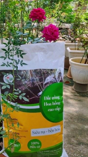 Người trồng có thể mua loại đất trộn sẵn giành riêng cho hồng ngoại Hà Lan