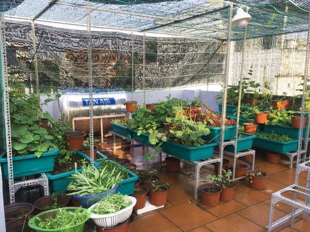 Nông Nghiệp Xanh Thắng Lợi ngoài cung cấp đất trồng còn nhận thi công vườn cây