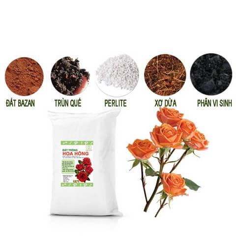 Có nên sử dụng đất trồng hoa hồng trộn sẵn?