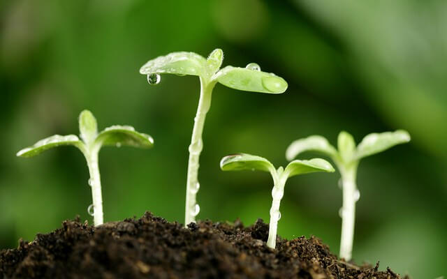 Bạn đã biết cách dùng mùn cưa trồng cây hiệu quả chưa?