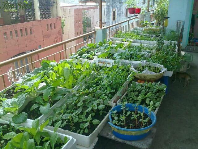 Mùn cưa được sử dụng rộng rãi trong các mô hình trồng rau sạch