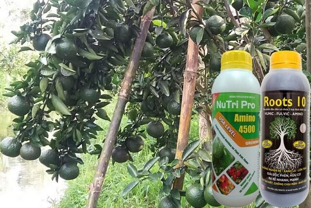 Phân bón lá Amino TV mang đến nhiều lợi ích cho cây trồng