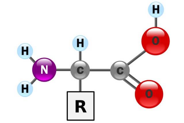 Cấu tạo của các amino acid