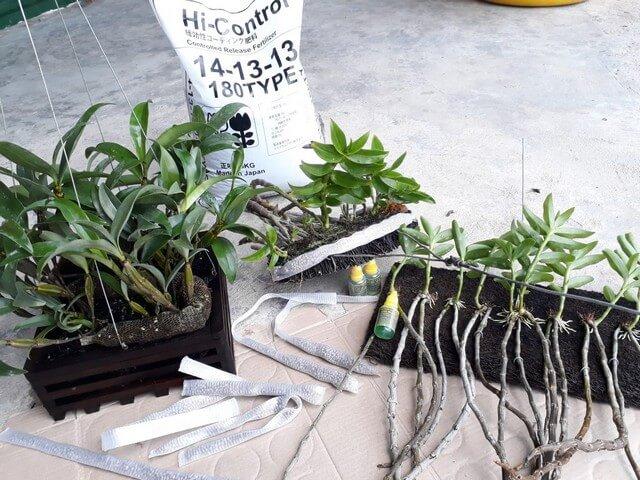 Nên sử dụng phân bón lá cho lan để giúp cây xanh tốt, khỏe mạnh