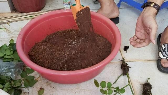 Nên phối trộn đất trồng với giá thể hữu cơ khác theo tỷ lệ thích hợp
