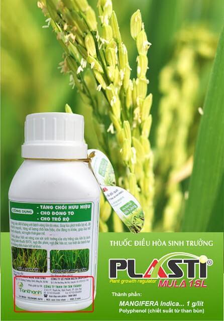 Phân bón lá Plasti là giải pháp hiệu quả cho mùa lúa bội thu