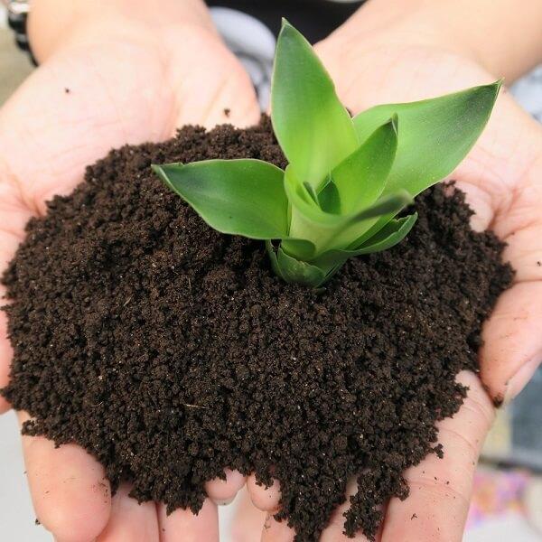 Phân trùn quế cung cấp các chất khoáng cần thiết cho sự phát triển của cây trồng