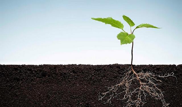 Nên bổ sung phân bón lá từ thời điểm cây con ra rễ, mầm, chồi