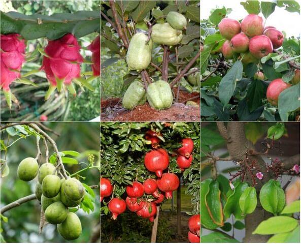 Cây trồng hấp thụ nhanh dinh dưỡng từ phân bón lá cho hiệu quả tức thì