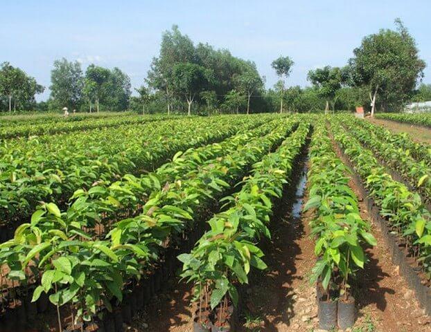 Phân bón lá đạm cá thích hợp cho mọi giai đoạn phát triển của cây trồng