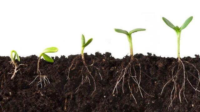 Humic acid là yếu tố quyết định đến độ màu mỡ và phì nhiêu của đất trồng
