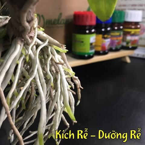 Sử dụng phân bón lá kích rễ nào mới mang lại hiệu quả cao?