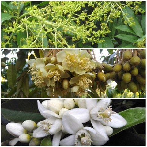 Điểm qua top 5 phân bón lá kích thích ra hoa chất lượng nhất