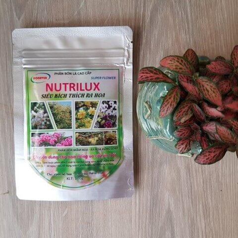 Phân bón Nutrilux kích hoa ra đều, nở đồng loạt, tỷ lệ đậu trái cao
