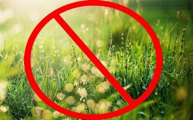 Bật mí top 5 thuốc trừ cỏ cháy nhanh đang được bà con tin dùng