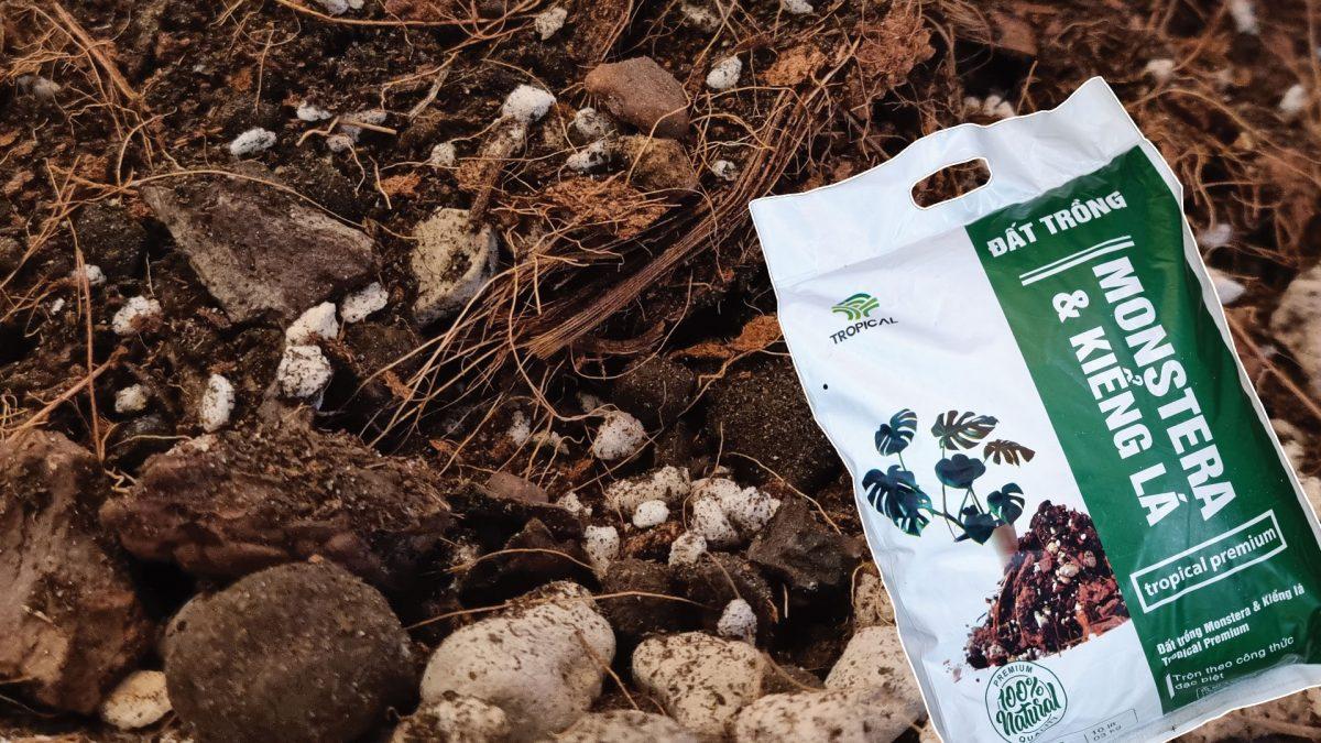 Đất trồng Monstera kiểng lá 1920x1080