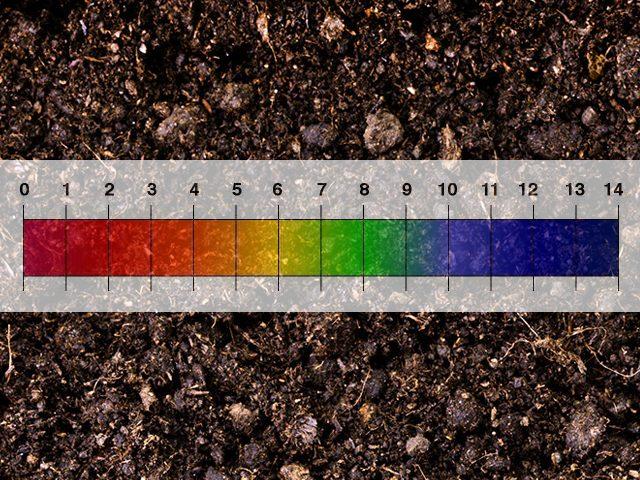 độ pH của đất