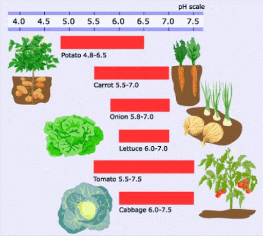 độ pH của một số loại rau màu