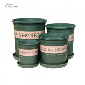 Chậu nhựa trồng cây Monrovia all size