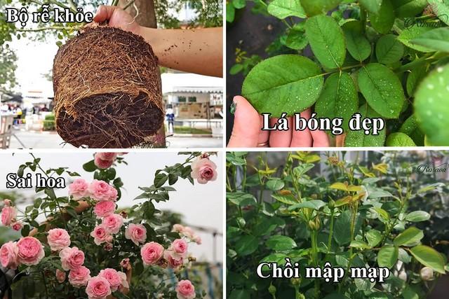 Phân bón lá Delfa thích hợp dùng cho các loại hoa kiểng