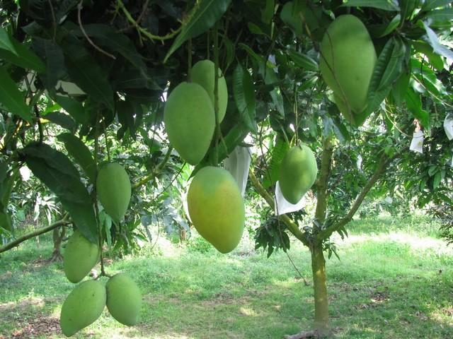 Bật mí top 5 phân bón lá dưỡng trái siêu chất lượng cho bà con