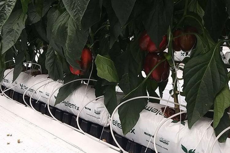 Túi giá thể xơ dừa ép thẻ grow bag trồng ớt chuông
