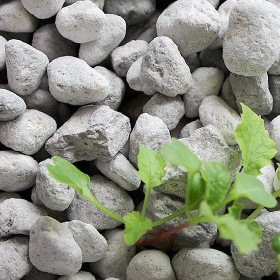 Đá bọt pumice trong đất trồng cây