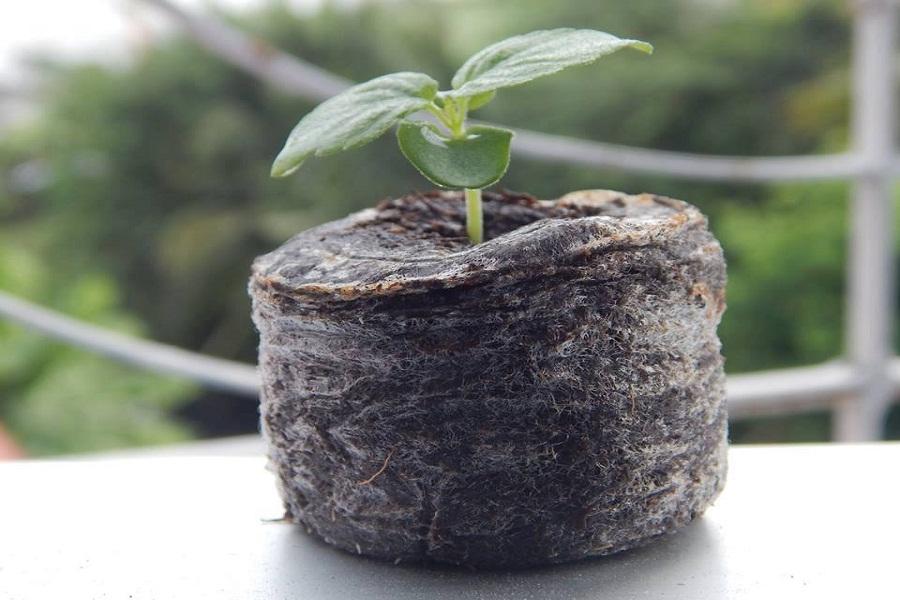 Hướng dẫn dùng xơ dừa trồng lan đúng cách