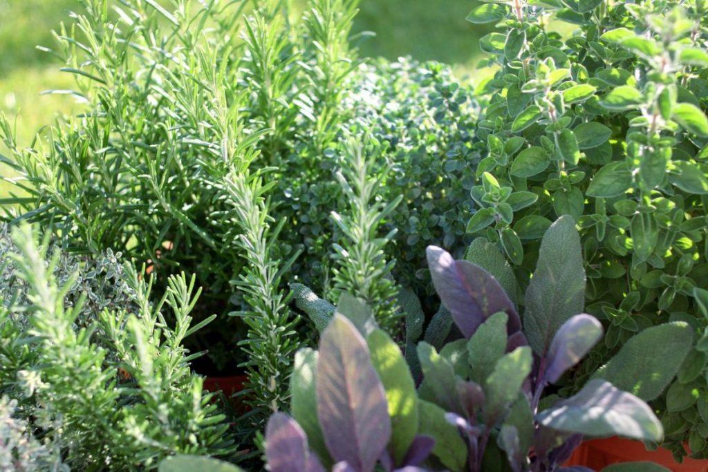 Vườn thảo mộc - vườn thảo dược