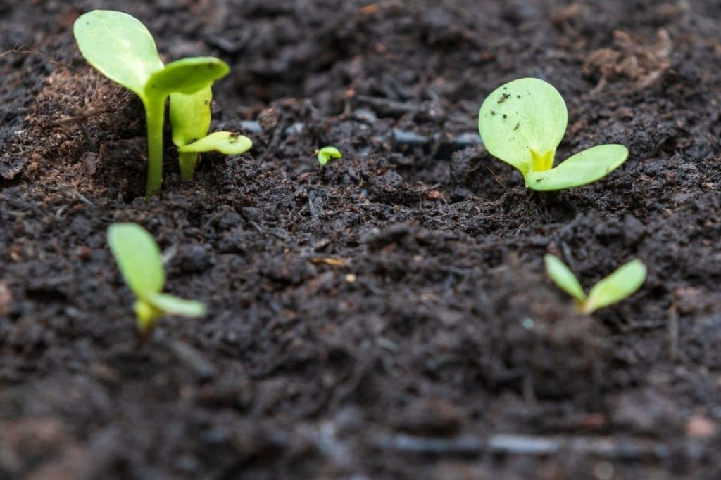 Hướng dẫn cải tạo đất trồng tại nhà đơn giản mà hiệu quả cao